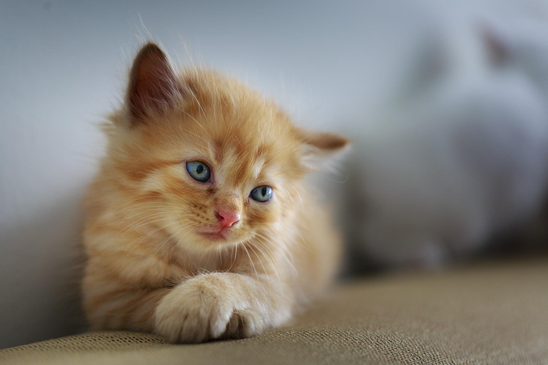 gehandicapte kat