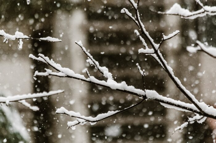 sneeuw in de lente